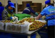 易果安鲜达日配超100万件 创生鲜行业新纪录