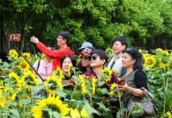 马蜂窝发布旅游数据,超九成游客遭遇过旅游陷阱