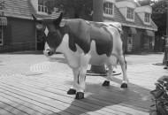 西部牧业出售子公司 降低企业负债避退市