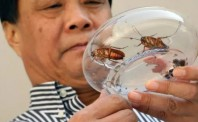 新商业模式诞生!奇葩公务员辞职养8亿蟑螂,无意中闯入百亿蓝海!