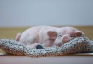 """互联网平台扎堆""""养猪"""" 农牧业面临智能化转型"""