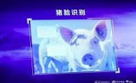 马云、刘强东纷纷入局,大佬扎堆养猪背后,大有深意!