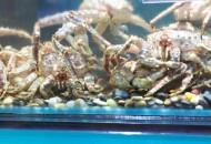 线上成为消费者购买大闸蟹的主要渠道