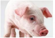 你以為20多的豬肉貴,更貴的你都不敢看一眼!