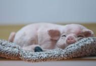 传美团计划数亿元入股土猪品牌壹号食品