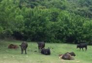 拼多多百亿补贴力推农产品 伊赛牛肉销量已超10万件