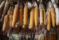 山西省农业农村厅与拼多多战略合作 市县长持续助农直播