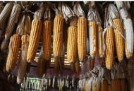 """福州举办""""消费扶贫·电商助农""""扶贫农产品直播节"""