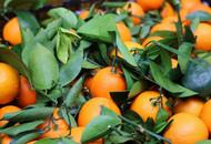 阿里助销寻乌县赣南脐橙 未来3月预计卖出1万吨